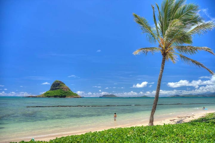 Explore Oahu your own way!