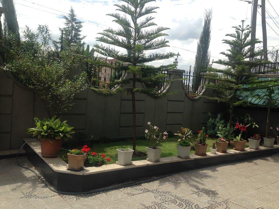 Little Garden (小花坛)
