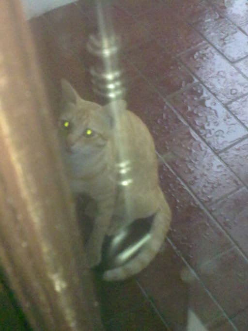 this is my cat.. we have hust 3 cats, not much