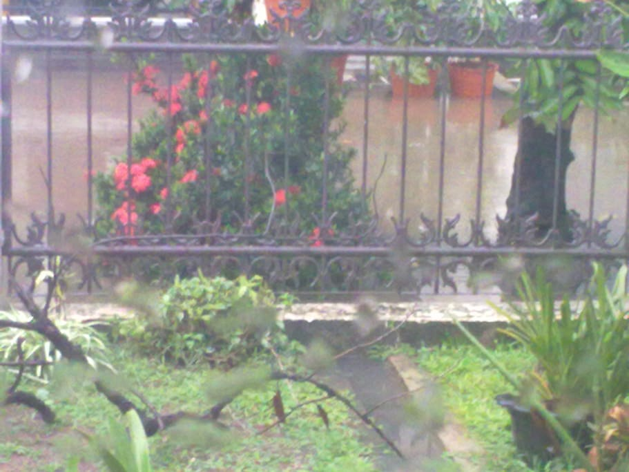 my garden, you can look at it through my windows