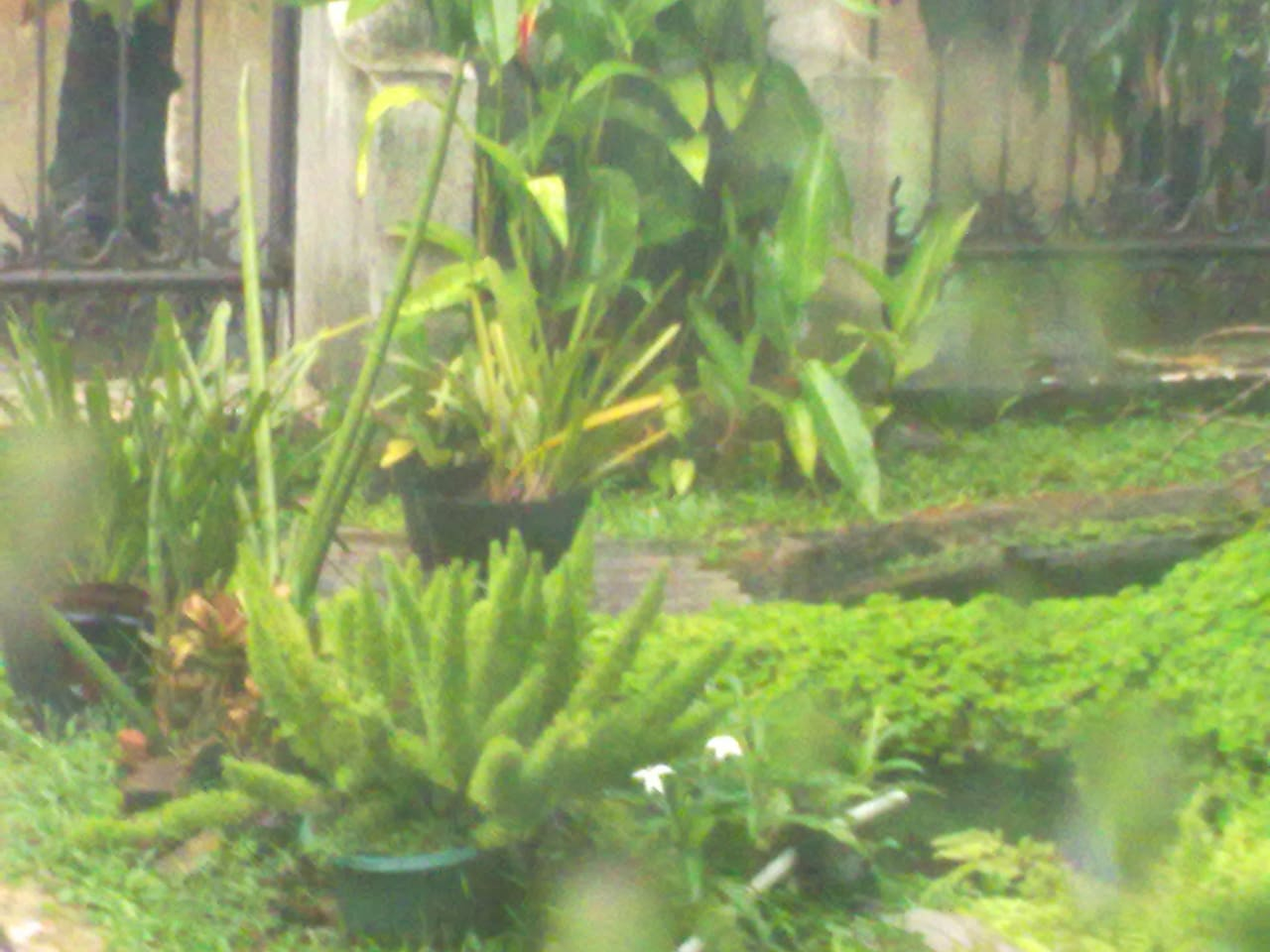 My Fishpond, you can see also through my windows