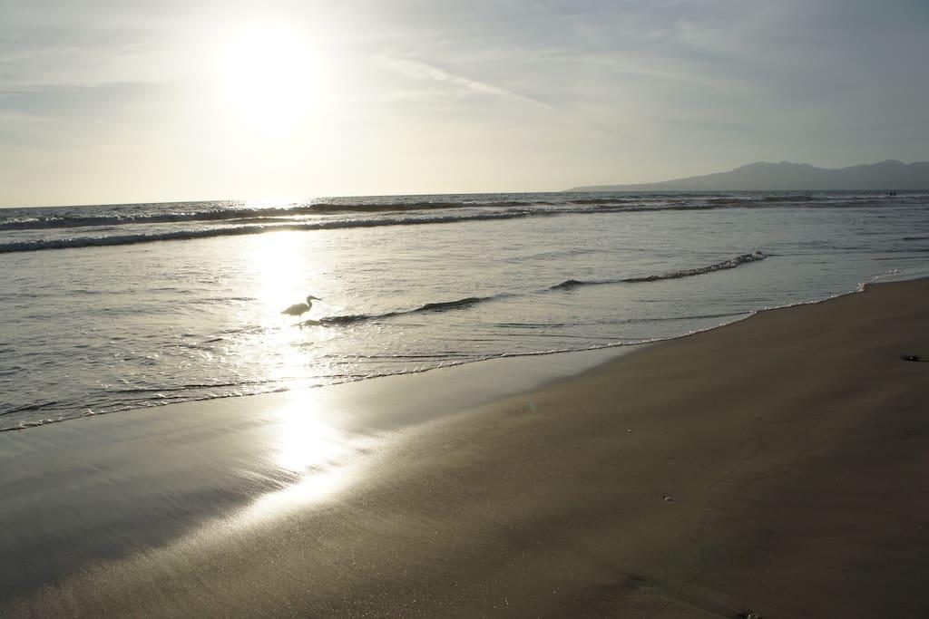 The amazing walking beach