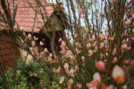 Zur alten Schmiede - Simmelsdorf - Haus