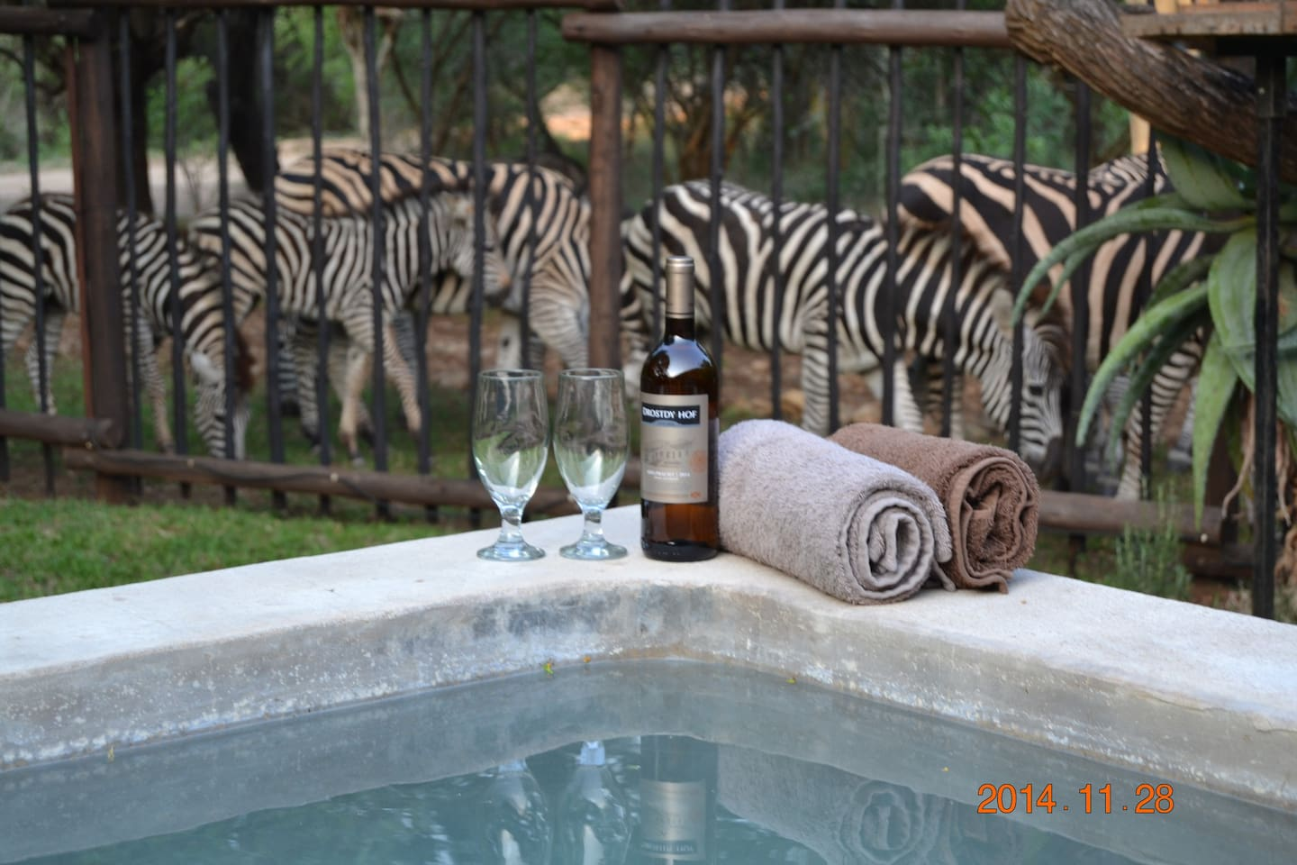 Cool down in the pool and watch the animals walk past the house and stop for a nibble on the green grass.