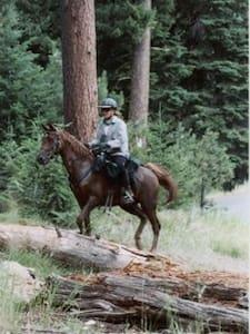 Horseback into the Enchanted Forest - Grants Pass - Ağaç Ev