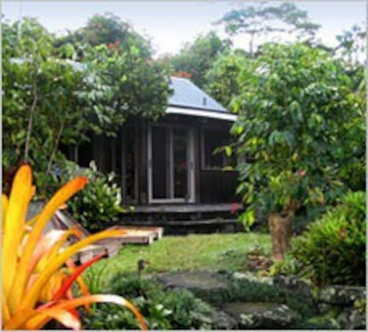 The cottage in the coffee trees.