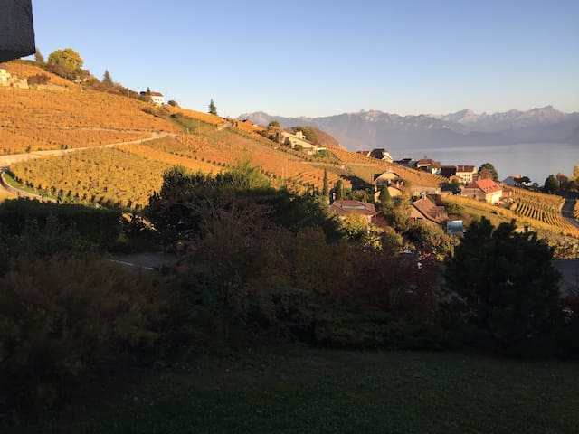 Welcome to Lavaux UNESCO landscape