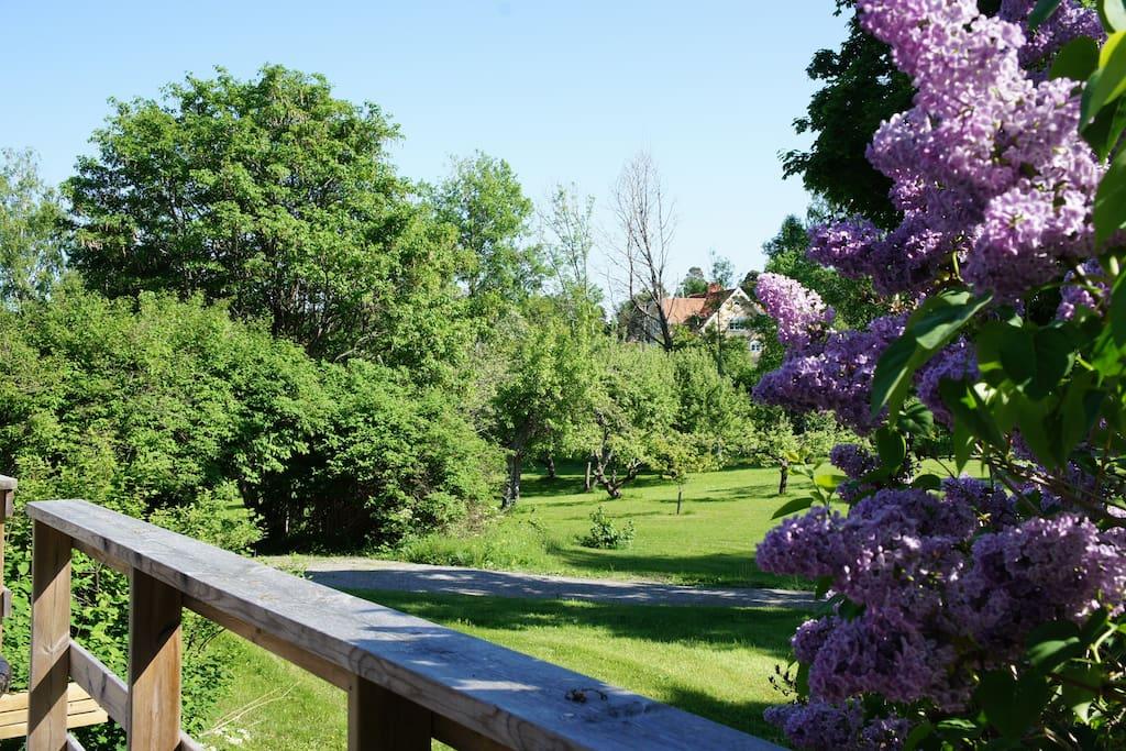 Utsikt mot trädgård