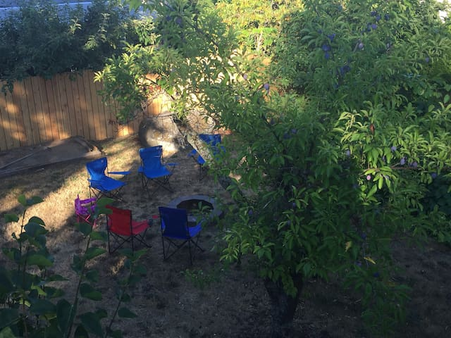 Backyard - Summer Time with FruitFrees in Bloom