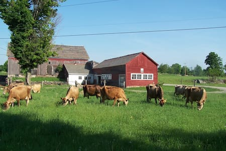 Come stay on a real VT dairy farm! - West Pawlet