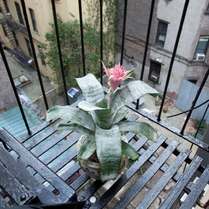 fire escape a.k.a. NY balcony