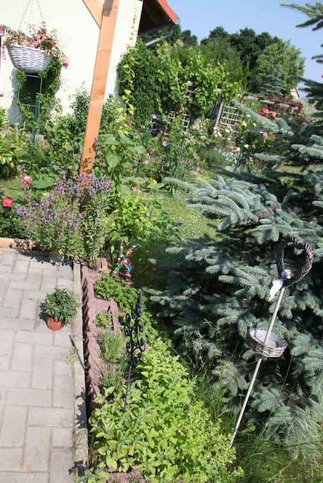 herbary / Kräutergarten