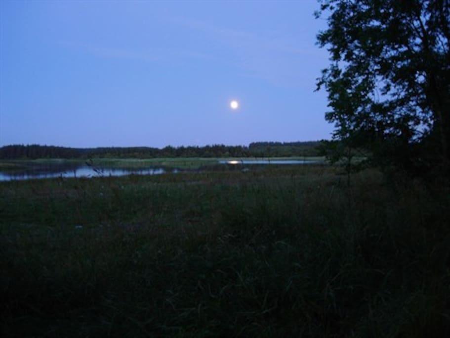 Fuldmåne over Sjelborg/Marbæk søerne i de store klitplantager som grænser op til gården