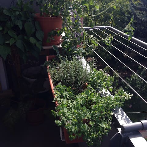 The balcony with plants