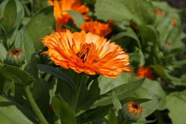 Sfeer beelden van de boerderij tuin