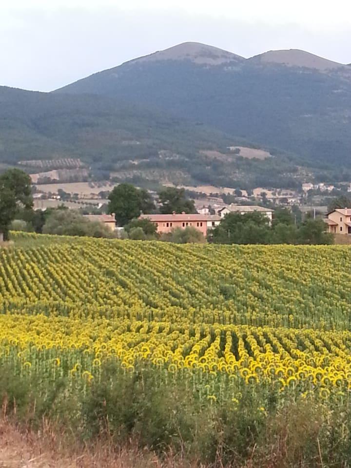 Casa Carbonara vista dai campi