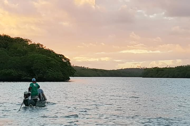 Mangrove Experience