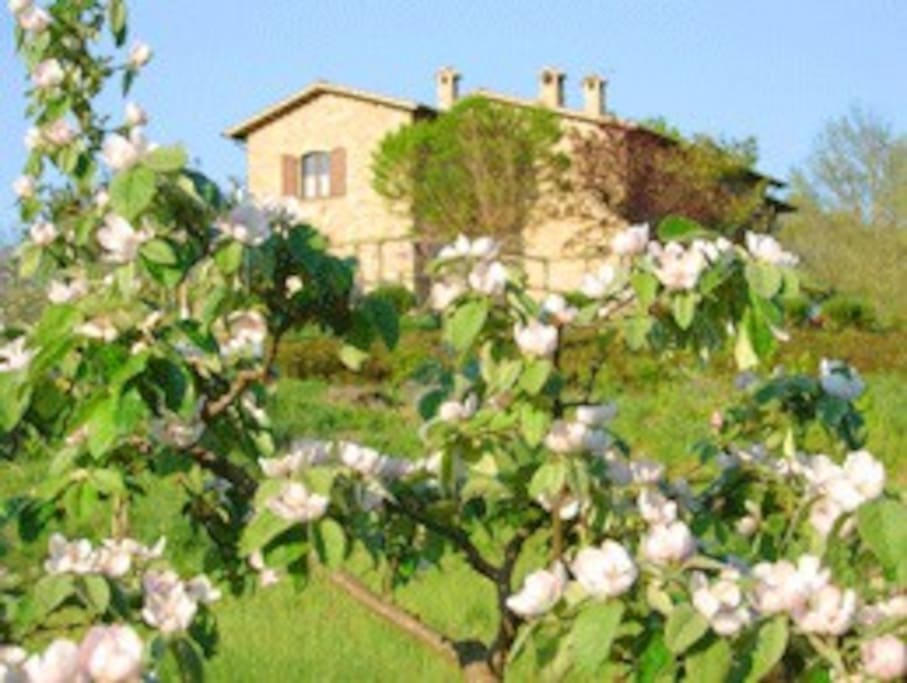 Casale Giuncheto from the orchard