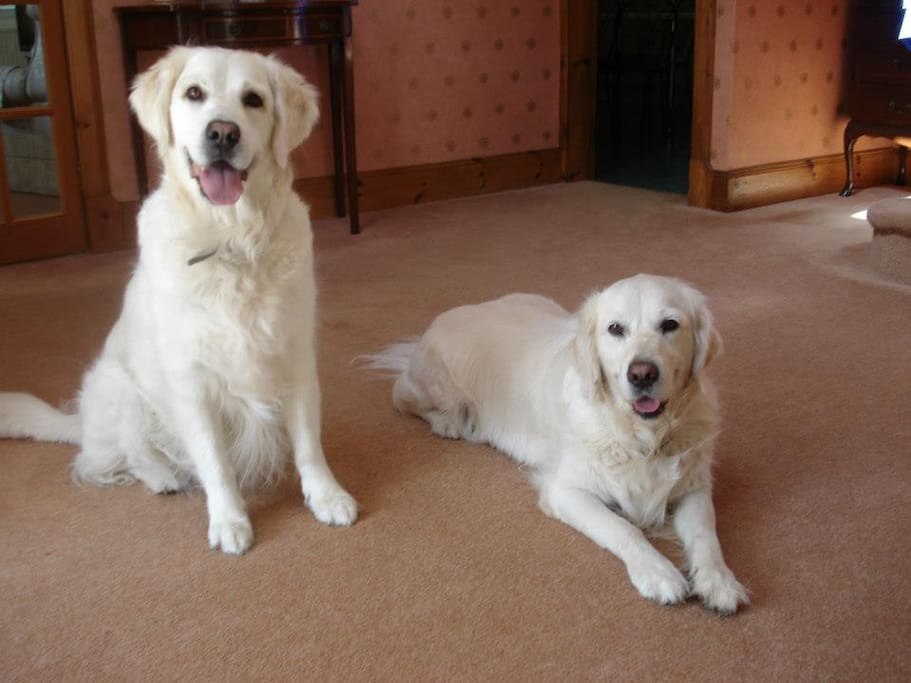 Hazel and Heidi are guaranteed to give you an enthusiastic welcome!