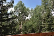 Panoramic view from the deck!