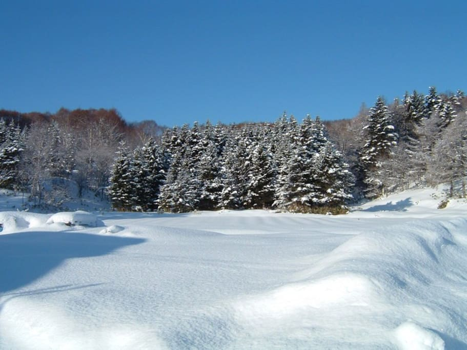【Beautiful winter season】 Colored by flowers and vegetables in summer.