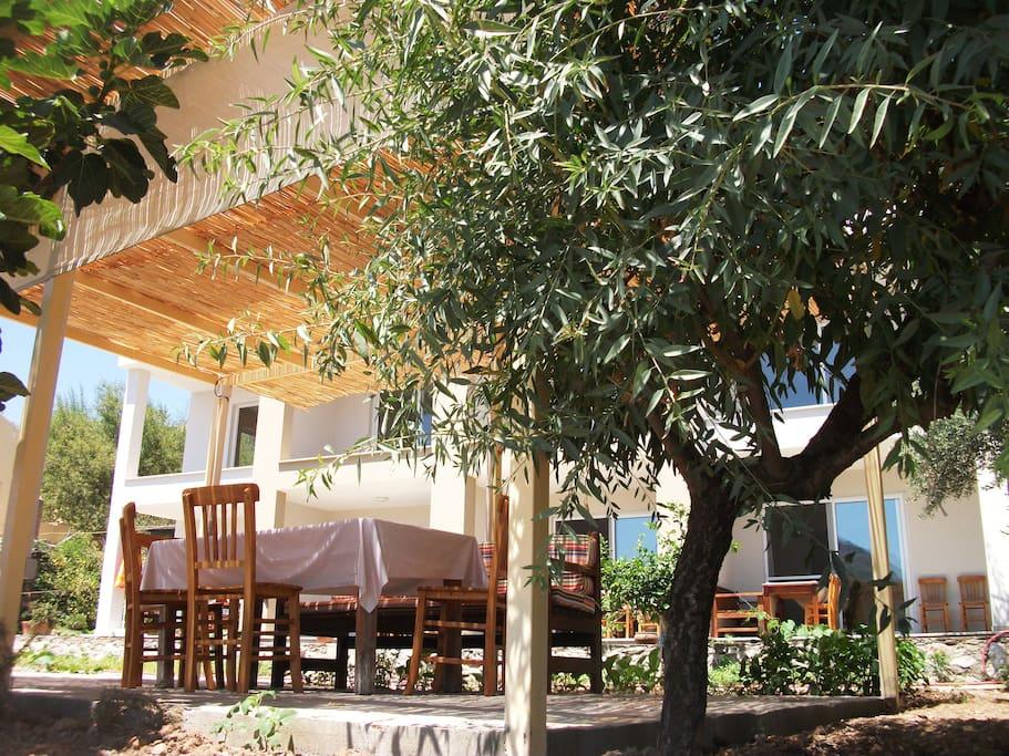 Jardin avec tonnelle, tables et chaises au milieu des oliviers et des amandiers.