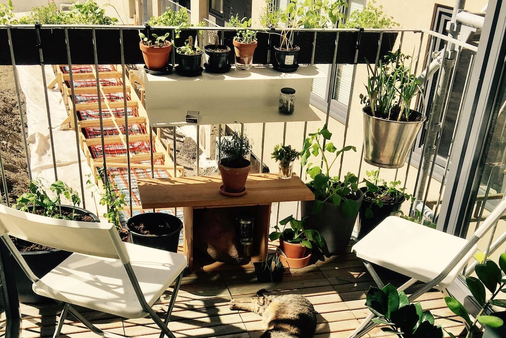 My balcony, urban gardening, flowers, vegetables and herbs for use.