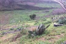 A nossa horta... Our garden...