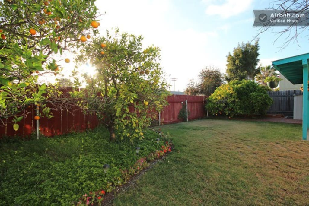 Backyard with Valencia and Navel Orange trees, have freshed squeezed juice every morning!