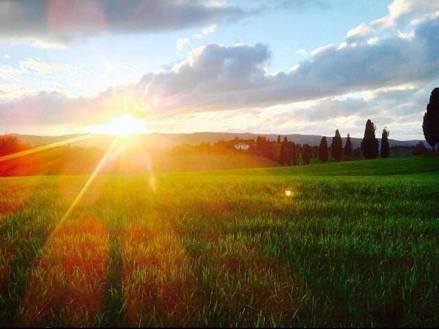 Relax in tuscany country - Lucignano - Bed & Breakfast