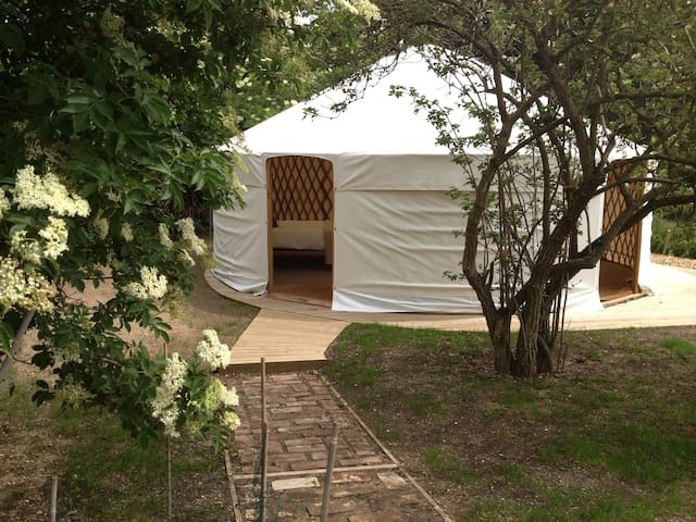 Luxury camping in Elderberry Yurt - Norwich