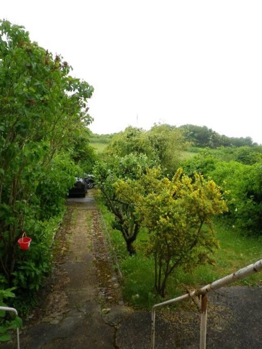 Le jardin - the garden