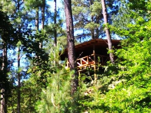 Shinkal hut, forest, creek, river, vineyards