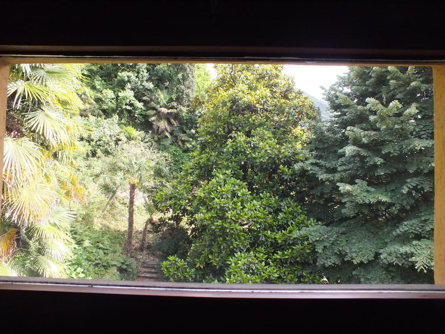 view from the windows