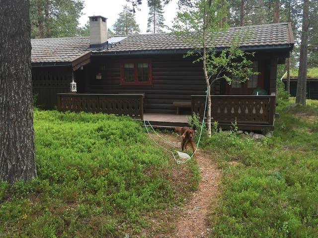 Hytte i Trysilfjellet Sør - Trysil - Blockhütte