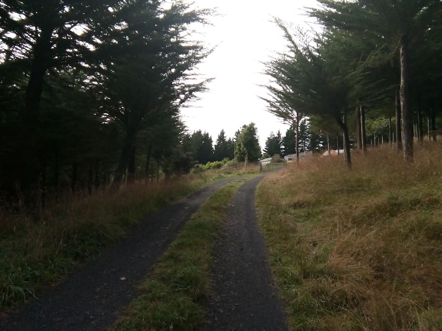 Driveway - 1.7km from roadway to cottage