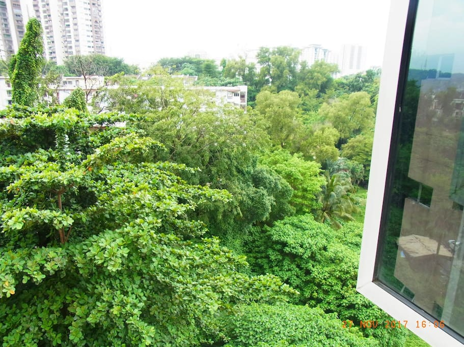 wake up to cool and fresh air daily. this is the view from this room. plenty of trees and overgrowth. relaxing and calming to the mind.