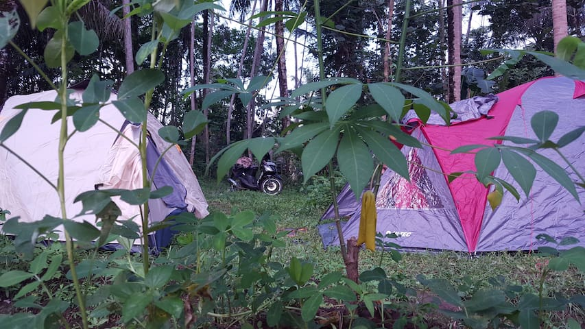 Our 2 and 5 people spacious tent swiss top quality (fit up to 5 people) include mosquito nest a huge futon matrass pillows and blankets.
