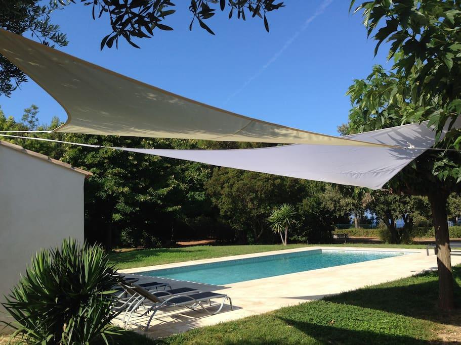 Sous l'olivier près de la piscine.