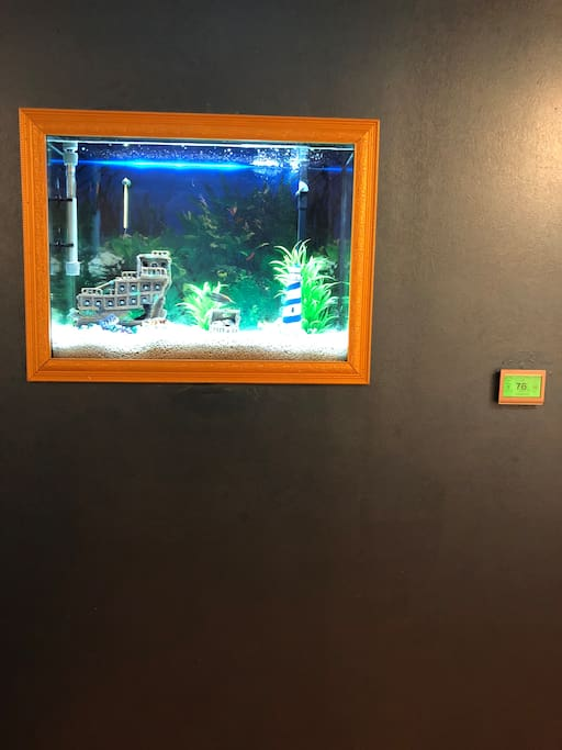 Relaxing fish tank in the sitting room...