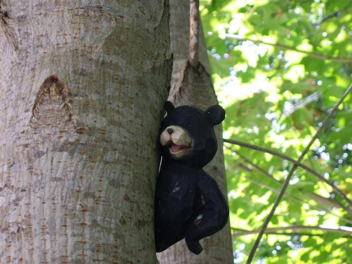 Treebear Scuba Suite