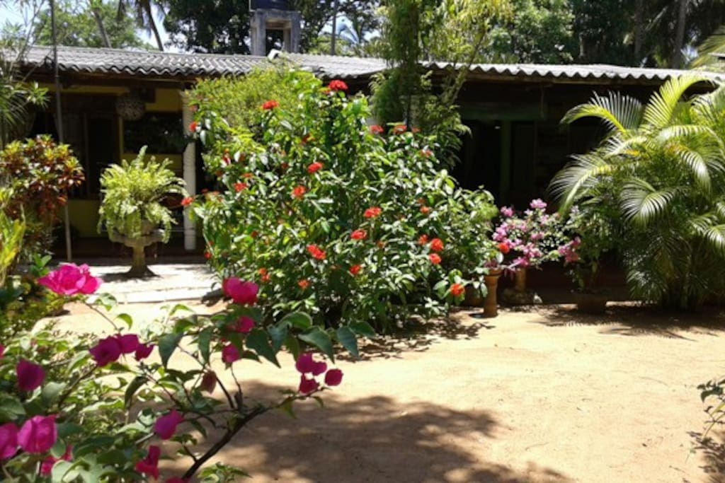 The Green Turtle Bed And Breakfast