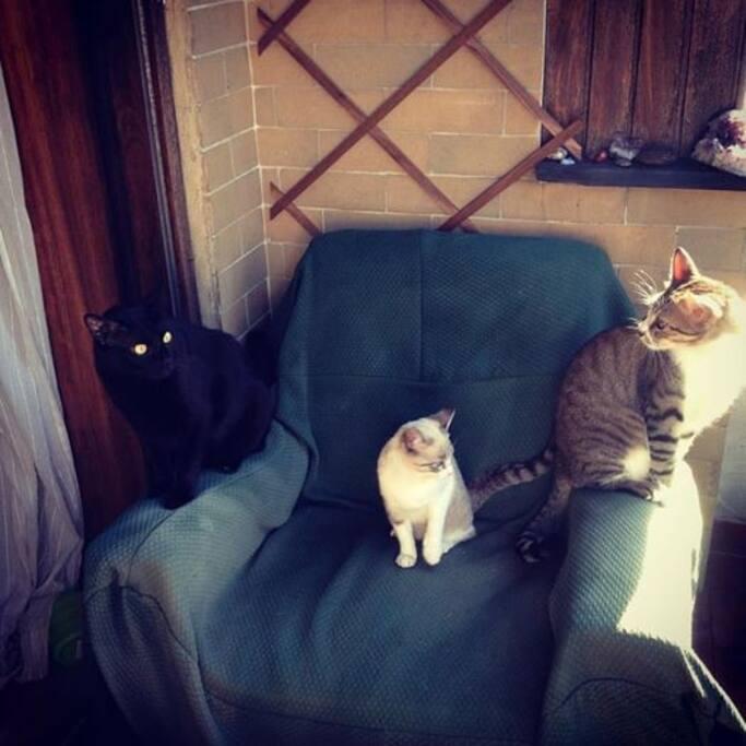 My friends cats - Escurinho-Riscas & Clarinha!