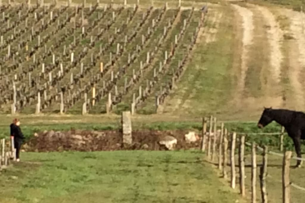 Vignes Médocaines