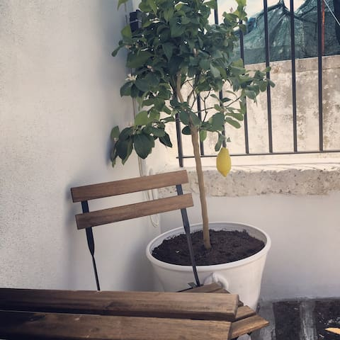 ROOFTOP with LEMONTREE and TABLE