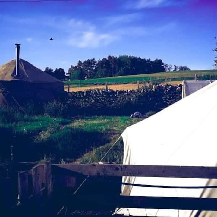 Traditional cosy yurt on rural farm.
