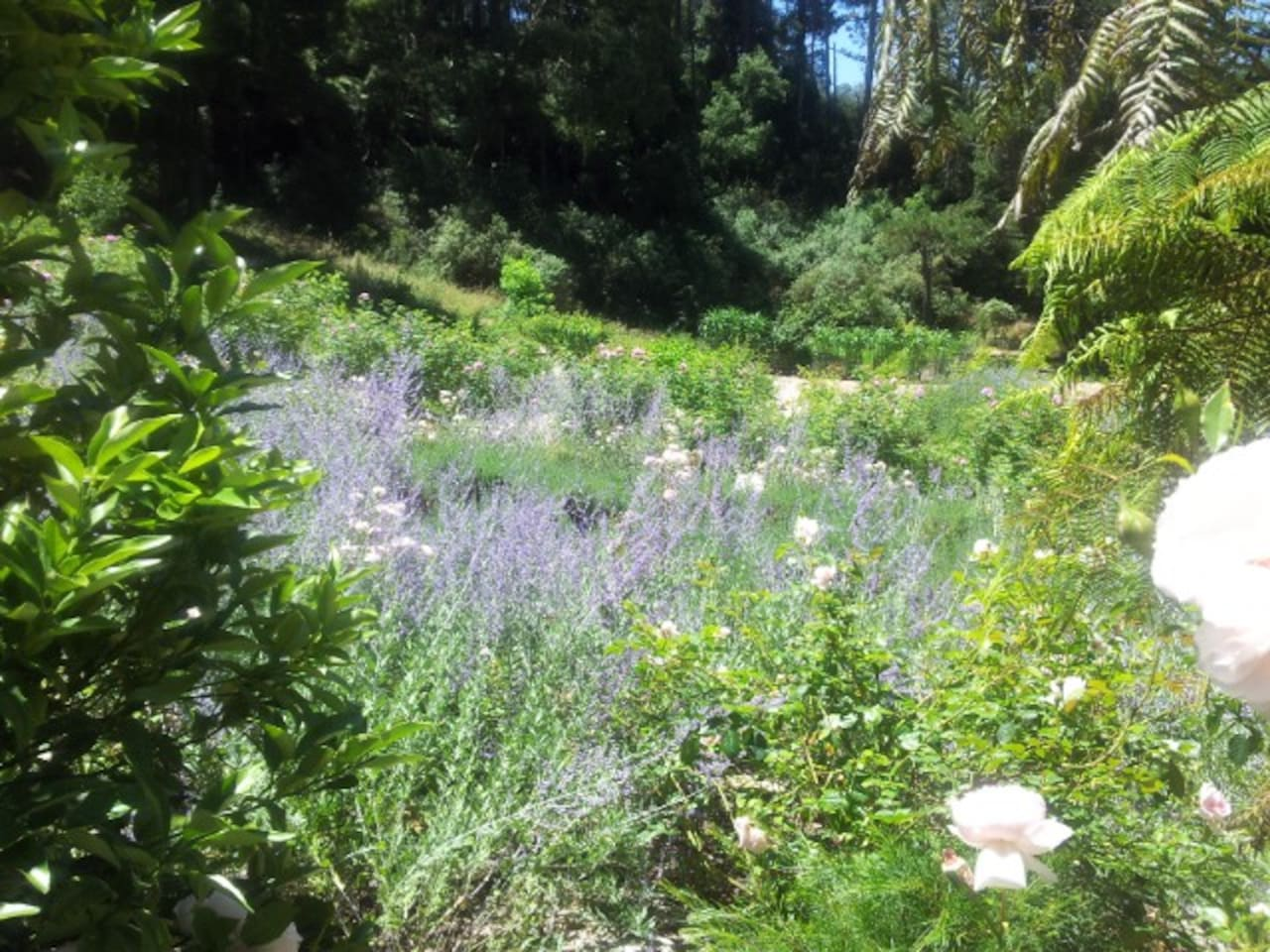 Natural, relaxed, permaculture gardens