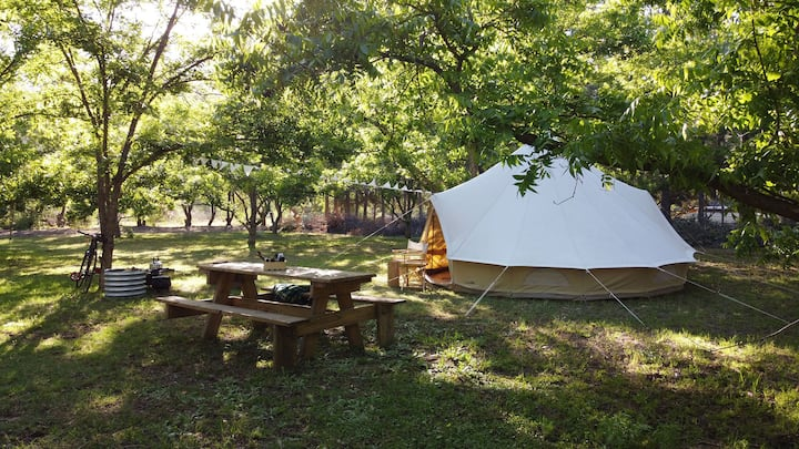 Shaded Bell Tent in Pecan Nut Orchard in Montagu