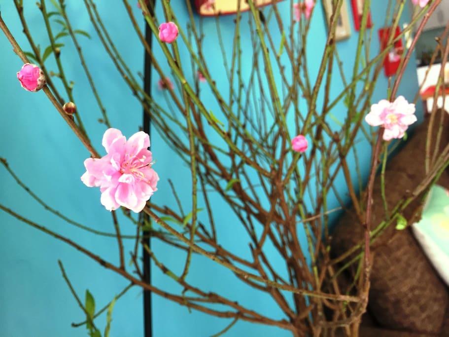 happy new lunar year