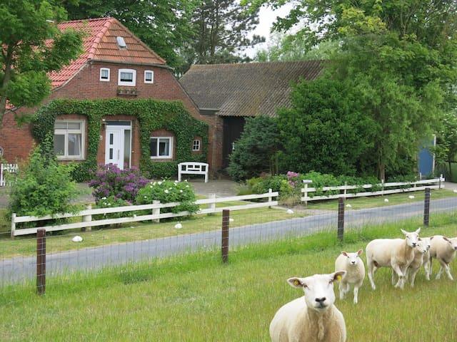 """Butjenter-Haus"" am Deich, Federwardersiel 21 - Butjadingen - House"